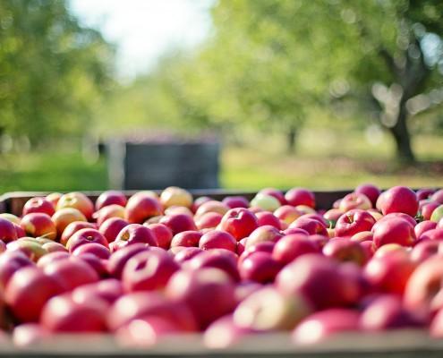 apples-1004886_1280